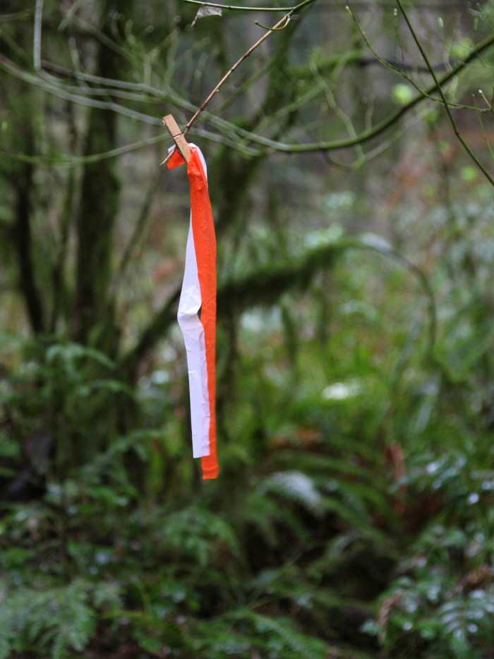 PART 1: A Trail Runner's Attempt at a Navigation Race