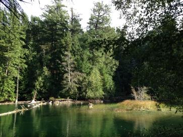 marsh-at-end-of-mountain-lake-363x272px-IMG_0271