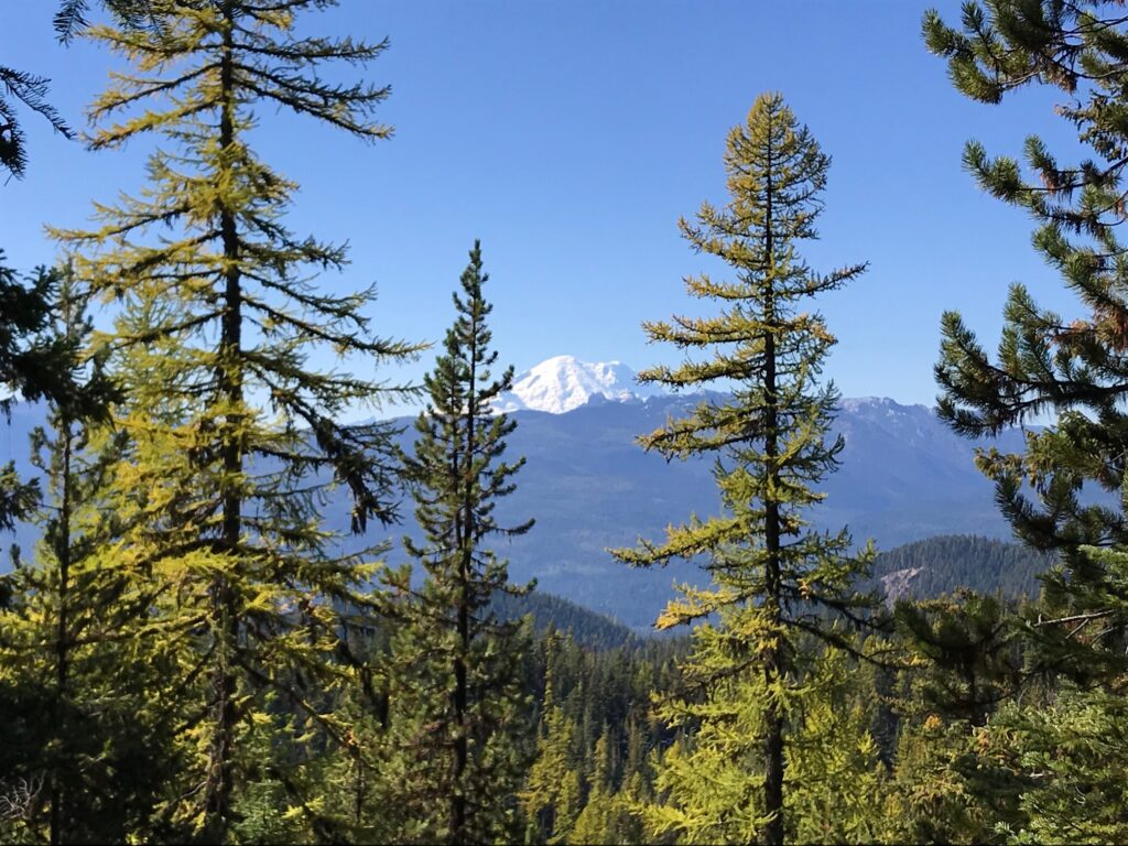 View of Mount Rainier and larch trees from the Quartz Creek Trail 949